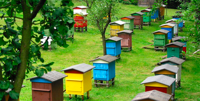 вибір вуликів для бджіл